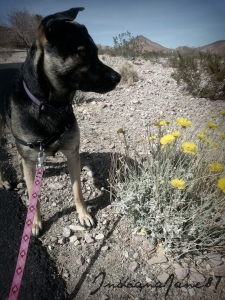 Stopping to smell the desert wildflowers.